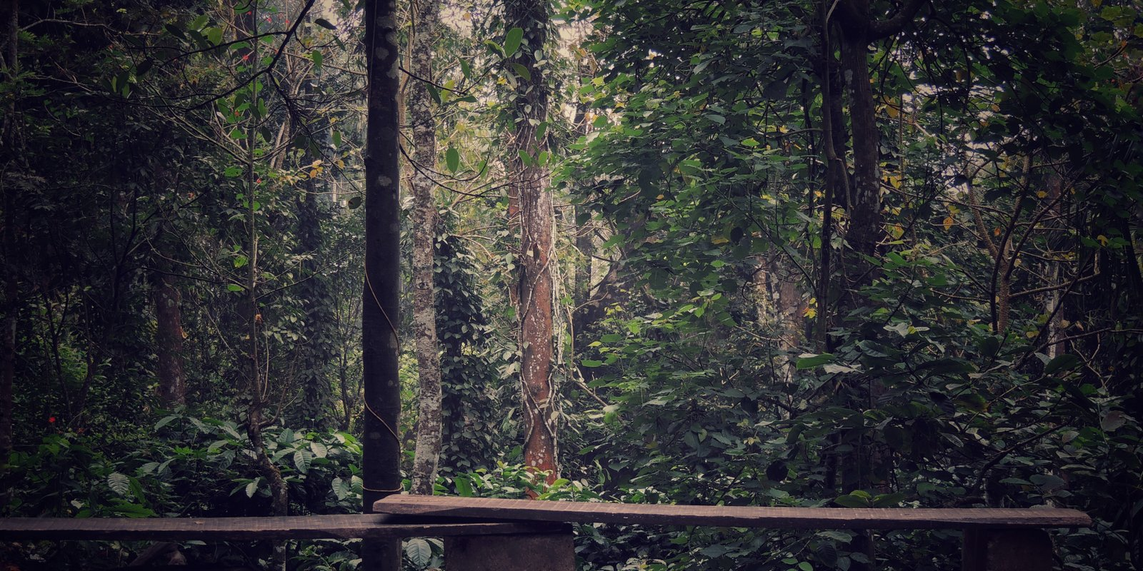 Forest in Wayanad